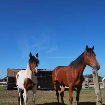 chevaux sous soleil